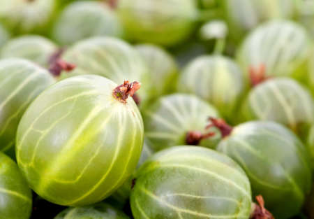 grosella: Fondo verde gooseberry Foto de archivo