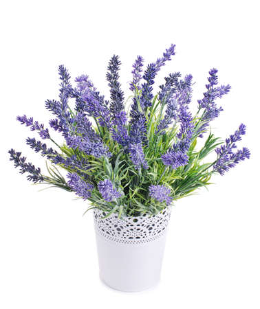 pot with lavender isolated on a white background Stock Photo