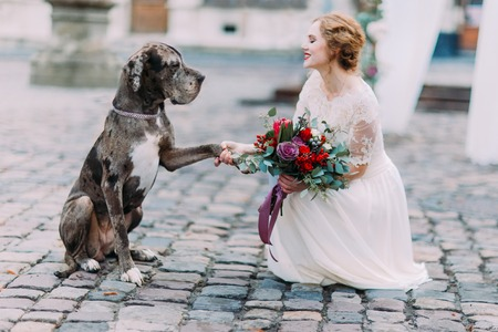 Nice big dog gives a pow to the gorgeous bride in the Lviv city center.