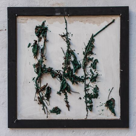 withered: Withered leaves on the frame. White wall background.