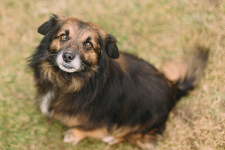 singleness: Sad brown dog looking helpless to the camera. Stock Photo