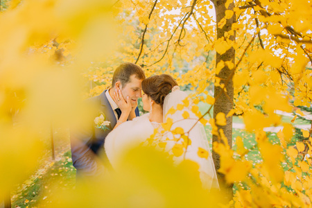 newly married couple: Romantic kiss of newly married couple under autumn tree with yellow leaves. Loving bride touching grooms face by her hand.
