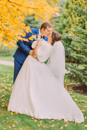 newly married couple: Romantic kiss of newly married couple under tree with yellow leaves in autumn park.