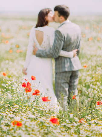 The poppies in the fiel at the background of the kissing newlyweds. Stock Photo
