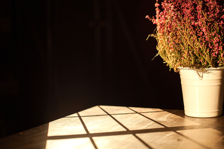 The isolated pot flower placed onm the table in the dark room Stock Photo