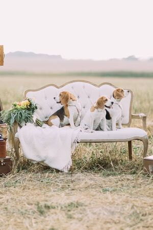 The lovely vertical portrait of the three little dogs sitting on the white soft sofa near the knitted plaid and bouquet of flowers in the field
