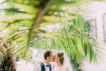 Close-up portrait of the kissing just married above palm leaves.