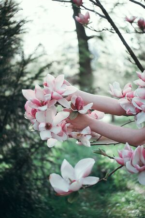 Hands holding Sakura Branch, close up. Calm pink nature colours. Banque d'images - 142547138