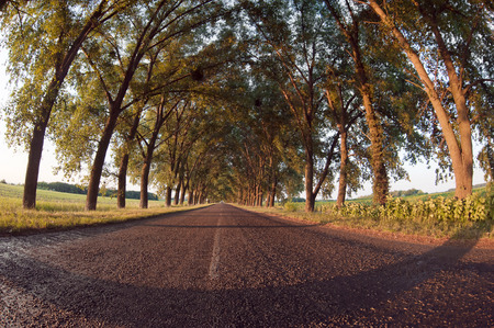 The road under the trees Stock Photo