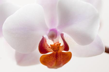 Beautiful orchid macro Stock Photo