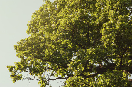 Spring green tree foliage Stock Photo