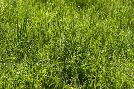 Blooming spring meadow grass Stock Photo