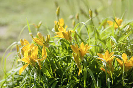 Blooming spring meadow yellow flowers Stock Photo