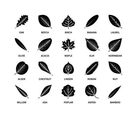 Useful leaves silhouette icons vegan analysis vector set. Design line elements leaf tree bush berries oxygen world ecology biology healthy food marketing business. Vector symbol set.  イラスト・ベクター素材