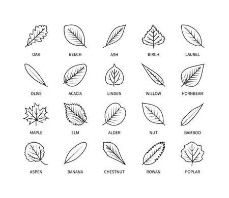 Useful leaves linear icons vegan analysis vector set. Design elements leaf tree bush berries oxygen world ecology biology healthy food marketing business. Vector illustration symbol set.