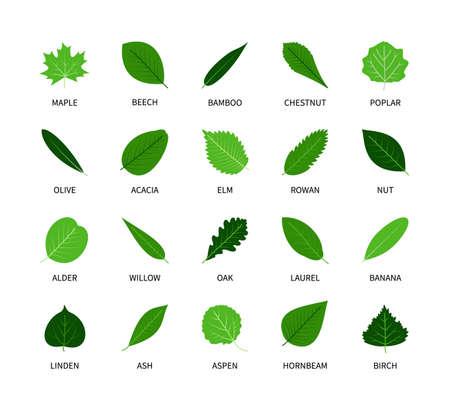 Useful leaves colored natural icons silhouette vegan analysis vector set. Design line elements leaf tree bush berries oxygen world ecology biology healthy food marketing business. Vector symbol set.  イラスト・ベクター素材