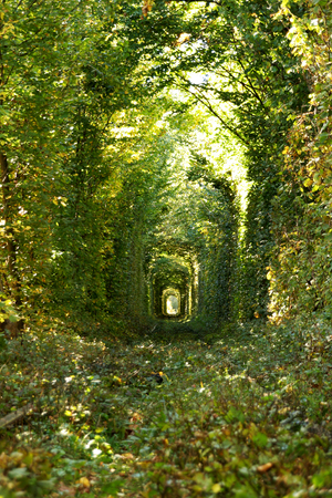 Wonder of Nature - Real Tunnel of Love, green trees and the railroad, Ukraine. Love Imagens - 120844151
