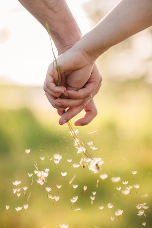 Young loving couple holding hands each other with bouquet of yellow dandelions in summer park, view of hands. A pair of hands holds a dandelion 版權商用圖片