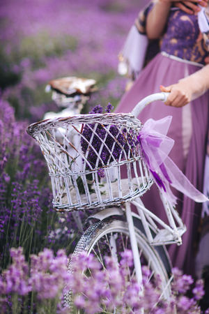 a bouquet of lavender in a basket on a bicycle in a lavender field a girl holding a velispette without a face collecting lavender in summer