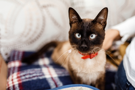 Funny cat with a red bow tie close-up. cat with butterfly. cat with eye defect. The concept of fashionable cats