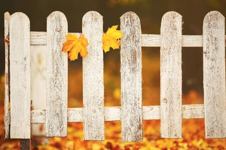 White close-up wooden fence with two yellow leaves on it. Autumn background.