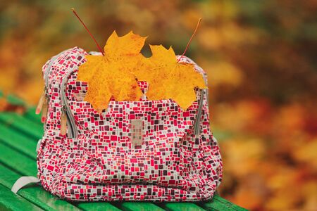 Back to school. autumn leaves. Red school backpack standing on green bench. school backpack on a park bench with leaves. two yellow maple leaves.