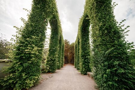 Green archway topiary of boxwood in sunny park close. selective focus