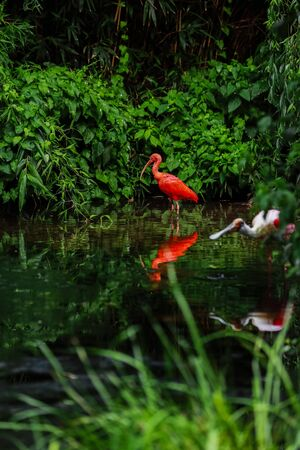 A pink flamingos hunting in the pond, Oasis of green in urban setting, flamingo. 写真素材