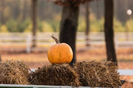 one pumpkin on straw bales at a farmers market. selective focus.