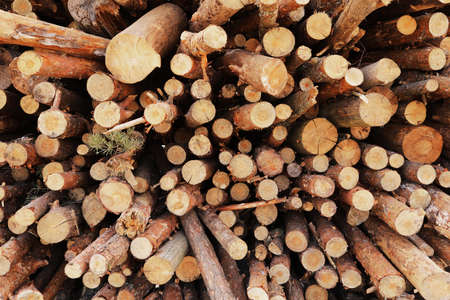 bunch of felled trees near a logging site. selective focus Stock fotó