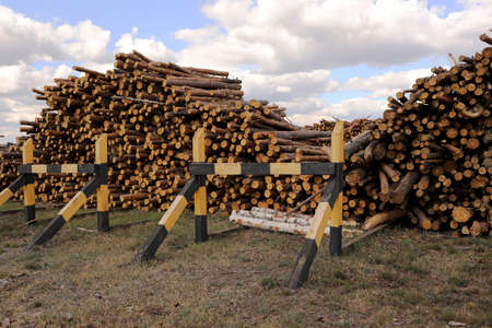 bunch of felled trees near a logging site. Piles of wooden logs under blue sky