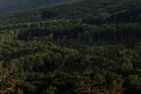 aerial view of forest. panorama of the mountain forest.