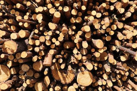 bunch of felled trees near a logging site. selective focus 版權商用圖片