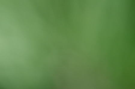 Green blur abstract background from pine