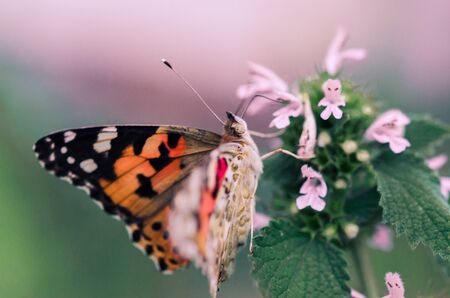 Flower of the Meadow and butterfly in summer in nature macro. Beautiful summer meadow, inspiration nature.