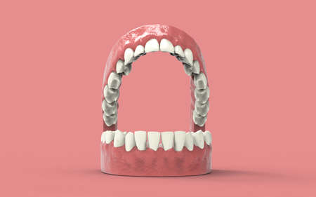 Teeth or dentures isolated on white. Open human mouth upper and lower jaw. 3D illustration.3D rendering.