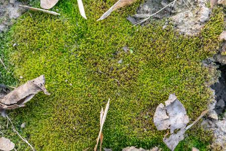 foresta muschio colore verde trama di sfondo primavera nella foresta