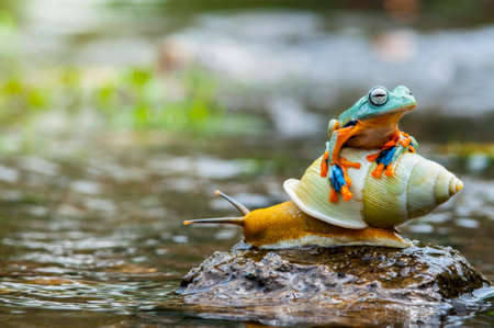 macros: flying frog, frog, tree frog,  frog above the snail, Stock Photo