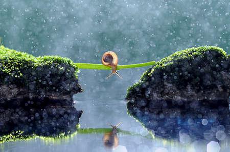 snails, snail, bokeh, Reklamní fotografie