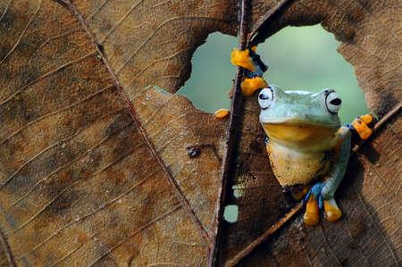 Frog hanging on dry leaf