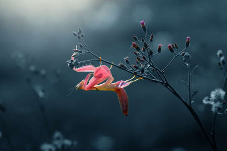 Orchid Mantis on branch Reklamní fotografie