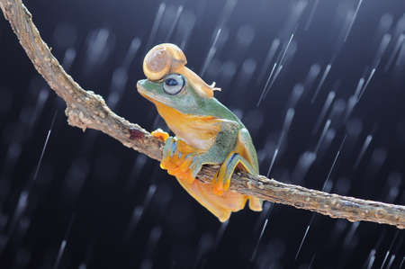 Frog, flying frog, tree frog, Imagens - 147049339