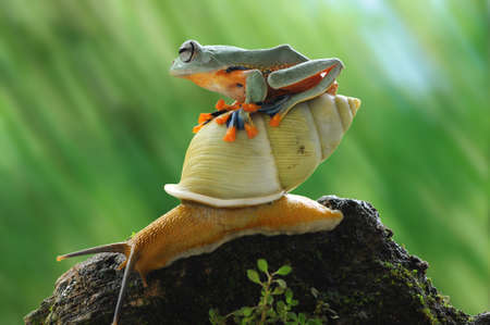 frog, snail, macro, animals, tree frog, amphibi, flying frog, macrophotography, macro photography,