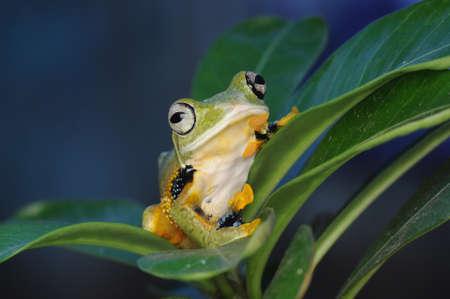 frog on a leaf Zdjęcie Seryjne