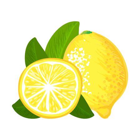 citron: Lemon fruit isolated vector hand drawing illustration