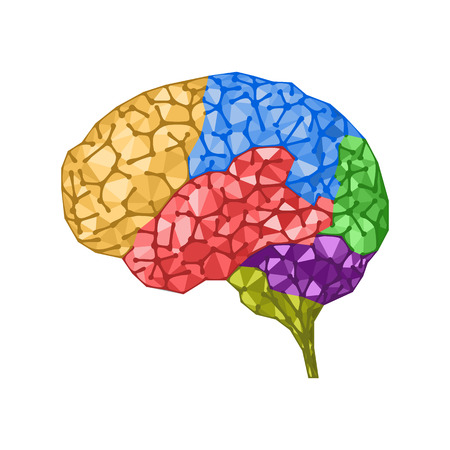 zones: Human brain concept with colored zones. Brain wrinkles like connected network dots. Vector isolated illustration