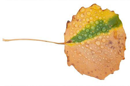 Autumn brown sheet of an aspen with rain drops. photo