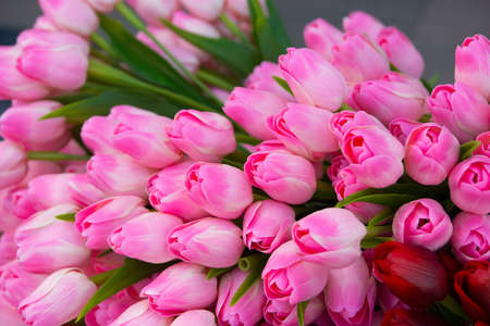 posy: Huge posy of beautiful blossoming pink tulips. Stock Photo
