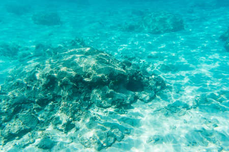 similan islands: Tropical see life view near Similan islands, Thailand