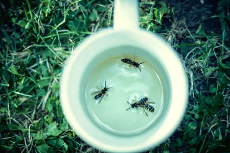 cup four: Four wasps in a cup on grass background